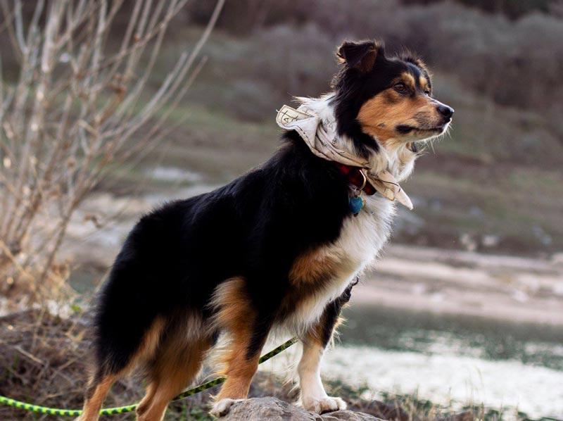 Popular Trick-Dog Act