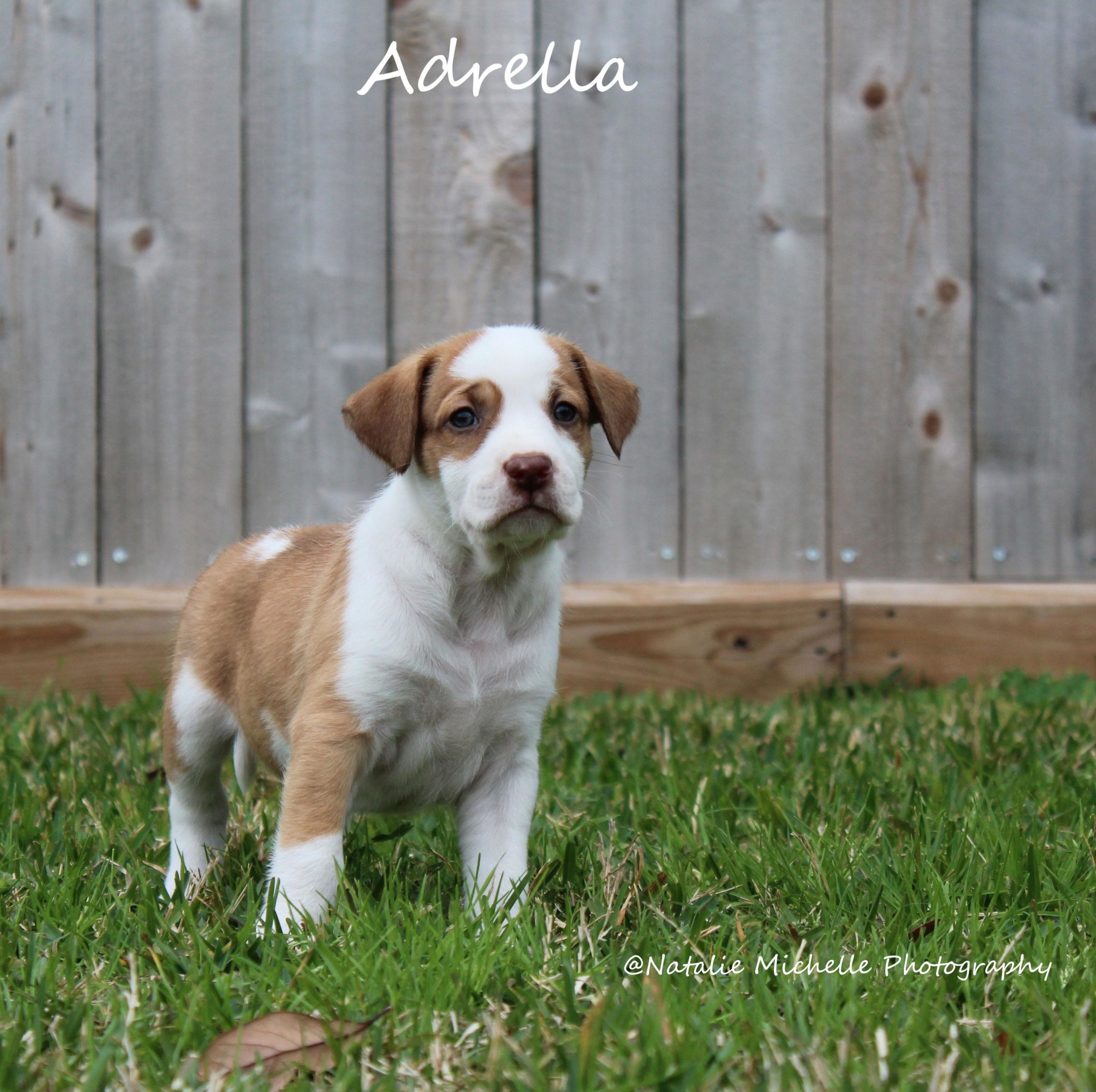 Adrella, STAR # 1532